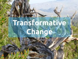 Transforming the Future: The Renewable Energy Challenge